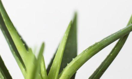 Spas ovog ljeta pronađite u čistoj, organskoj aloe veri